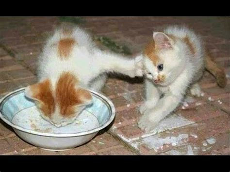 Funny Cats And Kittens Who Don t Want To Share Their Food ...