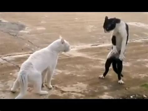 Funny Cats   Compilation   YouTube