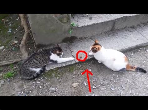 Funny Cats / Funny cat videos 2016   YouTube