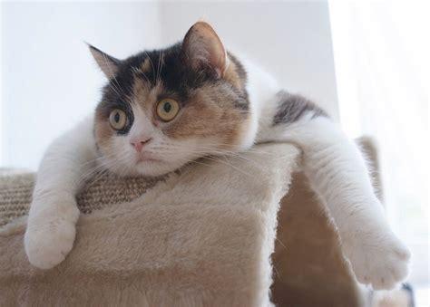 Funny cats   part 17  41 pics    Amazing Creatures