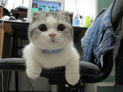 Funny cats   part 4  40 pics  ~ I Love Funny Animal ...