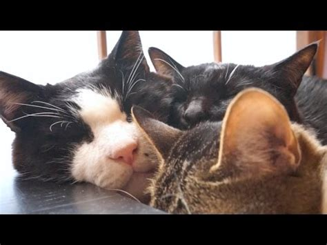Funny Cats0343 | Funny Cat Videos For Kids