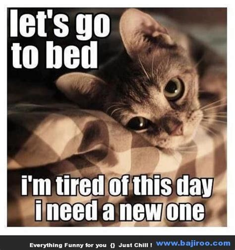 funny cute cats animals memes images photo gallery 2 ...