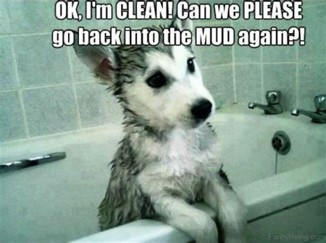 Funny Dog Memes Clean,Dog.Best Of The Funny Meme