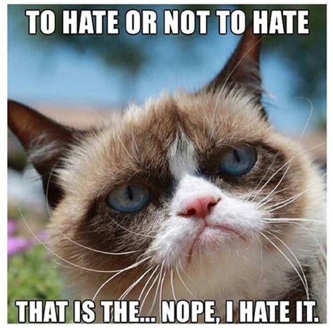 Funny grumpy cat meme