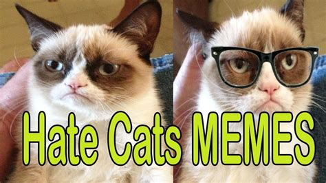 Funny Grumpy Cat Memes Hilarious cats Memes Ever 2017 ...