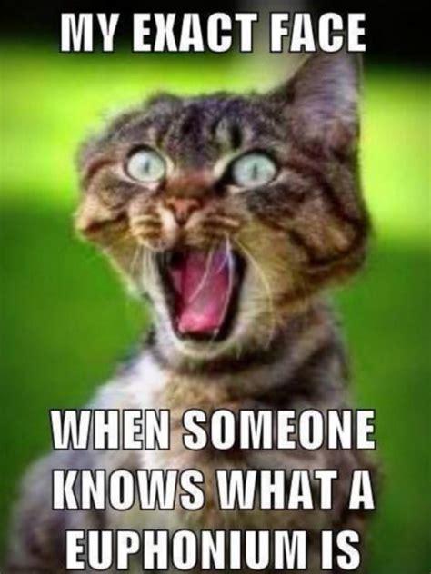 funny horse birthday memes | Daily Funny Memes