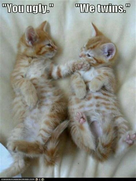 Funny kittens ~ Funny Jokes to cheer U up