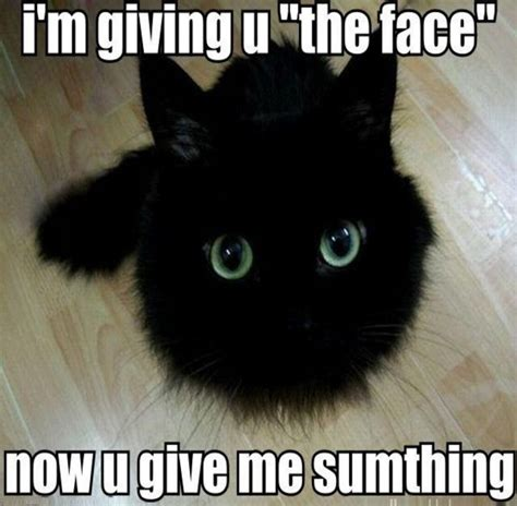 Funny Memes About Cats Pictures to Pin on Pinterest ...