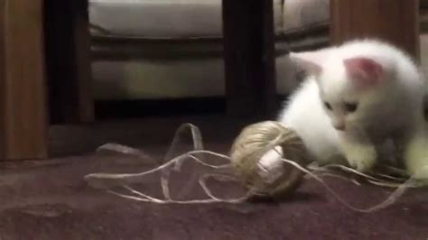 Funny video New  Funny Cat ever 2014[Most See ...