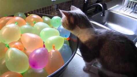 Gato descubriendo los globos de agua   YouTube