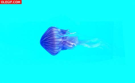 GIF: Movimientos de la medusa  Gif #6264