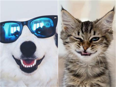 Gifs de animales graciosos   Todo mascotas
