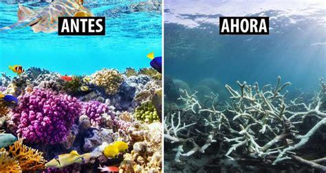 Gran Barrera de Coral en Australia ¿fuera de peligro ...
