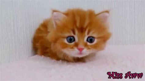 Grappige Dieren Video S Voor Kinderen Schattig Kitten ...