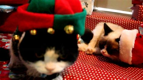 Grumpy Cat and Pokey on Christmas!   YouTube
