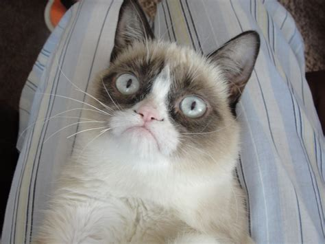 Grumpy Cat Angry Face | Funny Collection World