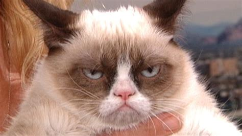 Grumpy cat becomes Internet sensation| Latest News Videos ...