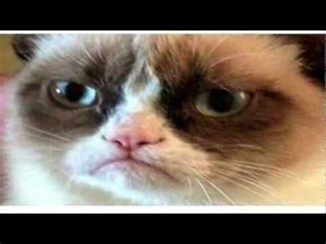 Grumpy Cat Christmas Present   YouTube