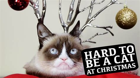 Grumpy Cat & Friends Star in  Hard To Be a Cat at ...