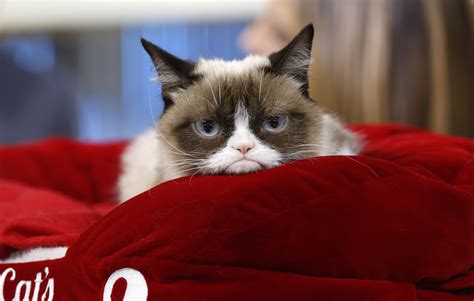 Grumpy Cat:  Grumpy Cat  Has Made Way More Money Than You ...