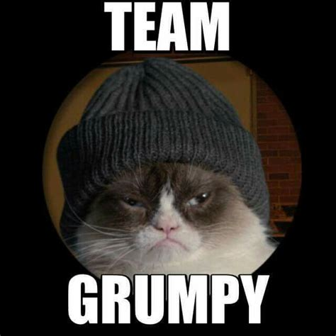 Grumpy Cat | Grumpy Cat | Pinterest | Cats, Cas and Lol