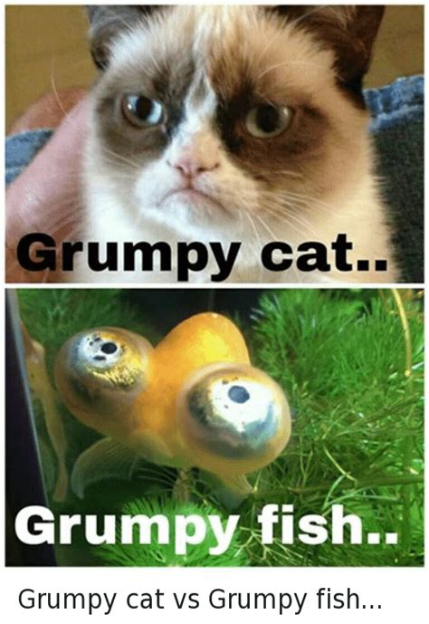 Grumpy Cat Grumpy Fish Grumpy Cat vs Grumpy Fish | Cats ...
