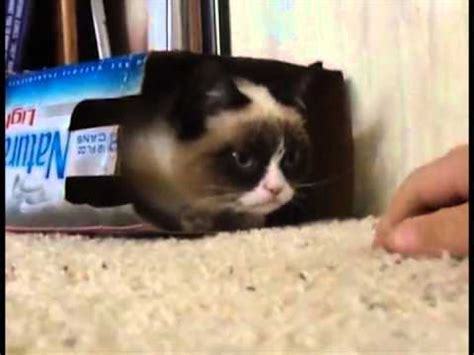 Grumpy Cat  I ll be in my box!   w Voiceover    YouTube