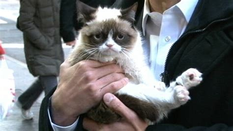 Grumpy Cat Interview 2013 on  GMA : Meme Star Exclusive ...