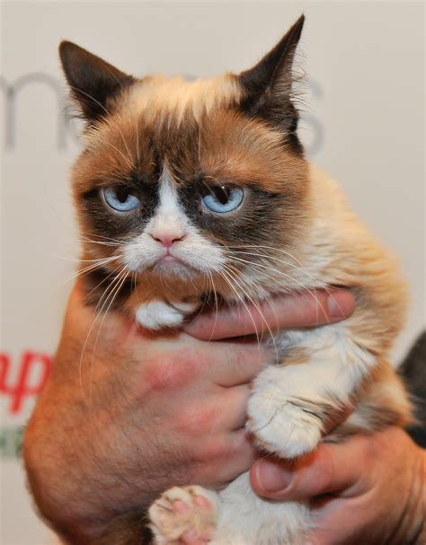 Grumpy Cat Is Now  Writing  Comic Books, And Here Are 6 ...