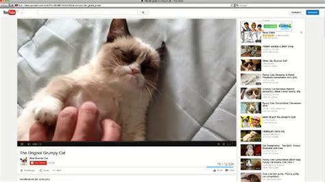 Grumpy Cat kommt ins Fernsehen