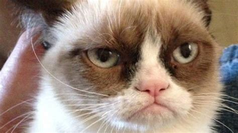Grumpy Cat, la star du web