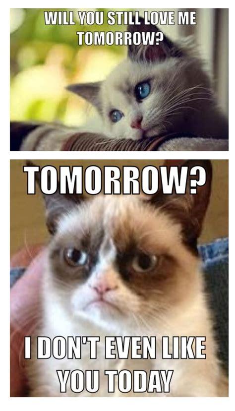 Grumpy Cat meme #GrumpyCat | grumpy cat = | Pinterest ...