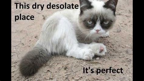 grumpy cat meme   YouTube