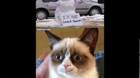 Grumpy cat memes 2017   YouTube