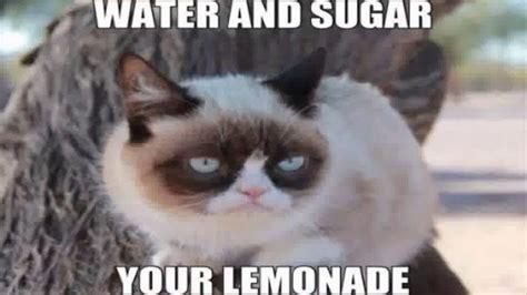Grumpy Cat Memes For Kids.   YouTube