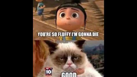 Grumpy Cat Memes Part 1   YouTube