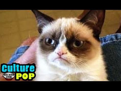 GRUMPY CAT: Movie Deal for Meme Making Feline Video Star ...