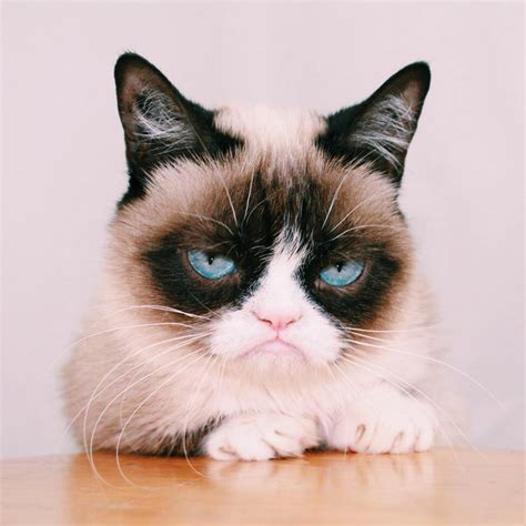 Grumpy Cat on Twitter:  http://t.co/chEvPNhSxB