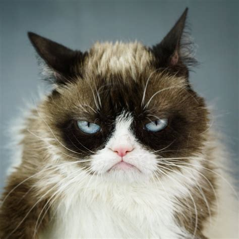Grumpy Cat on Twitter:  https://t.co/AsX8e4jYrz