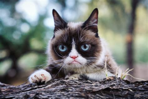 Grumpy Cat on Twitter: