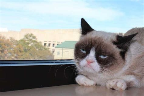 Grumpy Cat, Real Name 'Tardar Sauce,' Taking The World ...