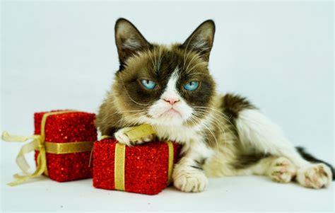 Grumpy Cat  @RealGrumpyCat  | Twitter