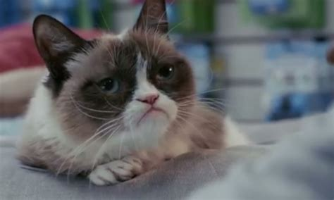 Grumpy Cat s Worst Christmas Ever: The trailer for the ...