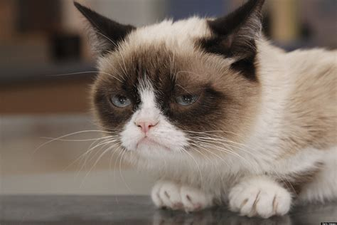 Grumpy Cat scores lucrative endorsement deal with Nestle