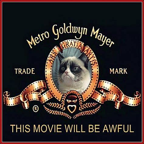 Grumpy Cat signs a Hollywood movie deal, still not ...