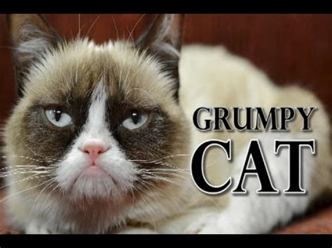 Grumpy Cat Sings   YouTube