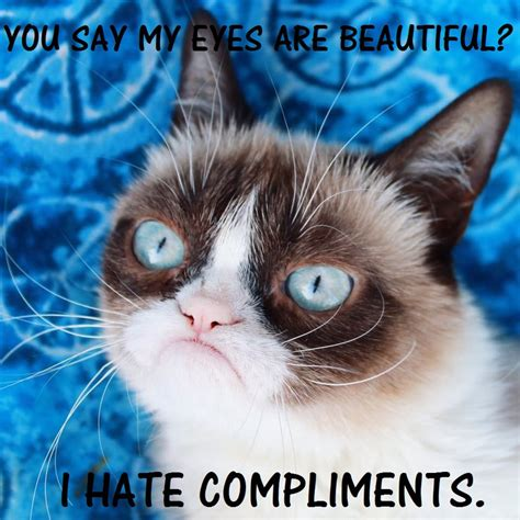 Grumpy Cat. The LowKey Tsundere of REAL LIFE by ...