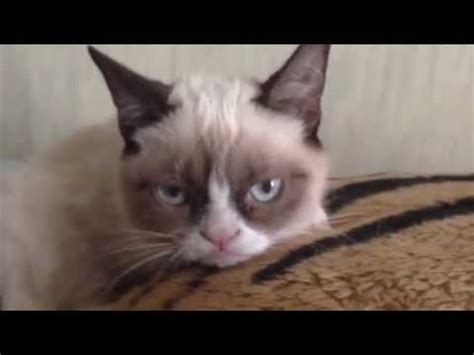 Grumpy cat  the video : videos