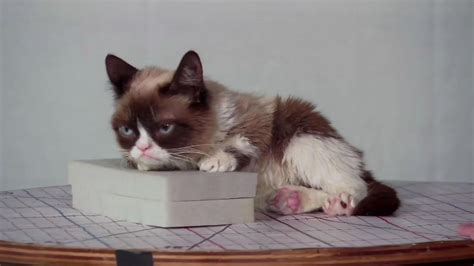 Grumpy Cat to be immortalized in wax by San Francisco s ...